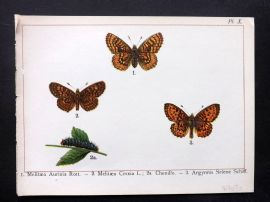 Joanny Martin 1902 Antique Butterfly Print 10